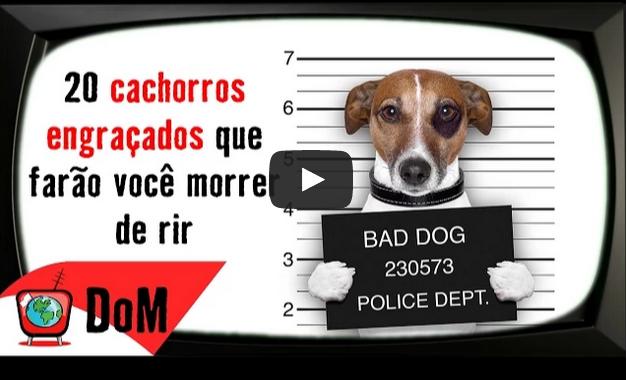 Top 20 cachorros mais engraçados da internet