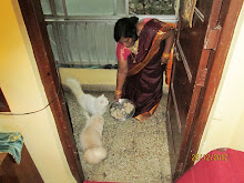 Housekeeper Sabina.Dias feeding the cats.,Matahari & Matata.