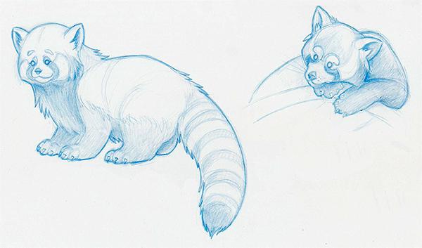 Fox in the Rain Red Panda Pencil Sketch