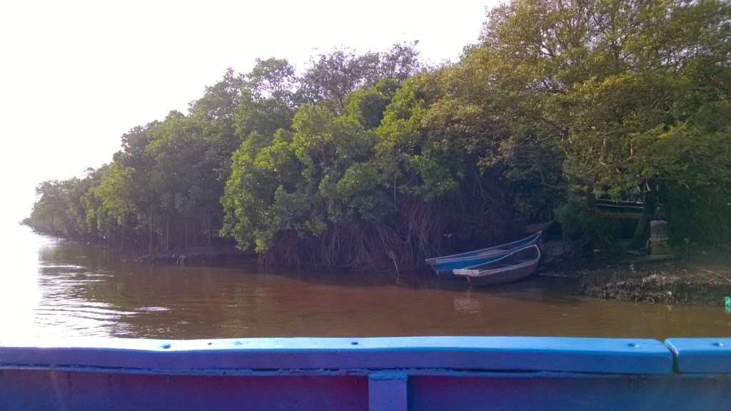 Mandovi river, goa, mangroves