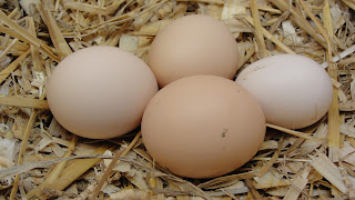 chicken eggs in a nesting box