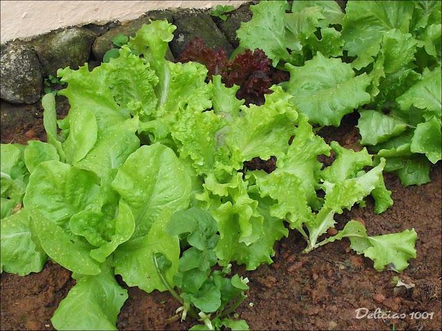 imagens de jardim horta e pomar : imagens de jardim horta e pomar:Meu pomar/horta/jardim: HORTALIÇAS – Delícias 1001Delícias 1001