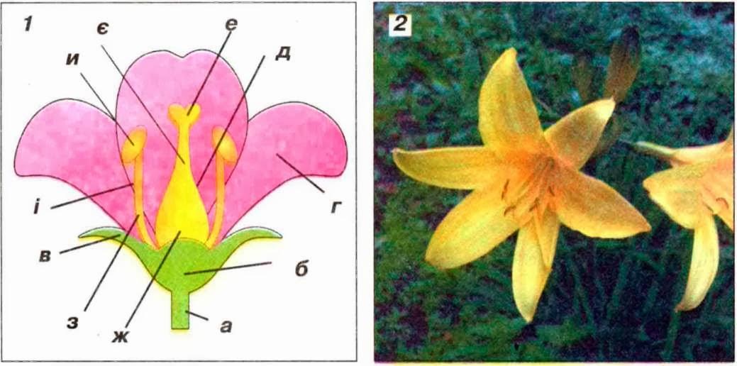 Квіти джерело натхнення окраса