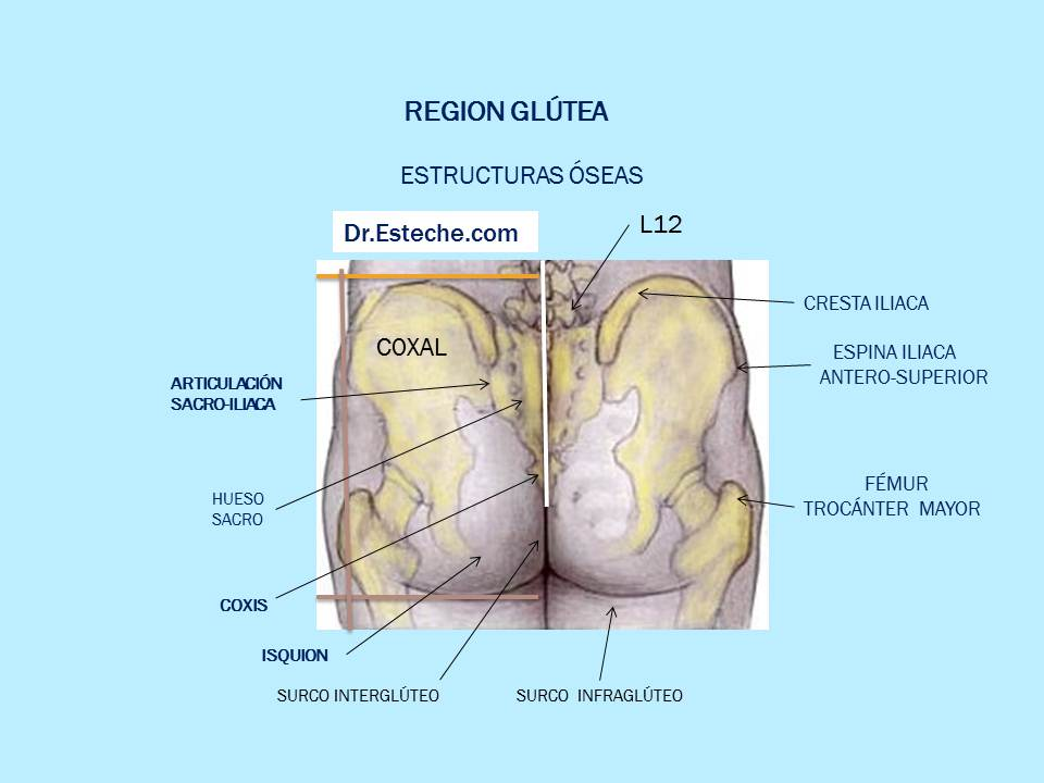 Dr. Esteche | Cirugía Plástica de Glúteos | Buttocks surgery: REGION ...