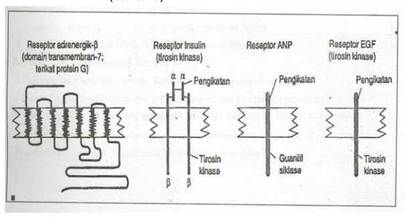 gambaran berbagai jenis reseptor membran dengan contoh masingmasing