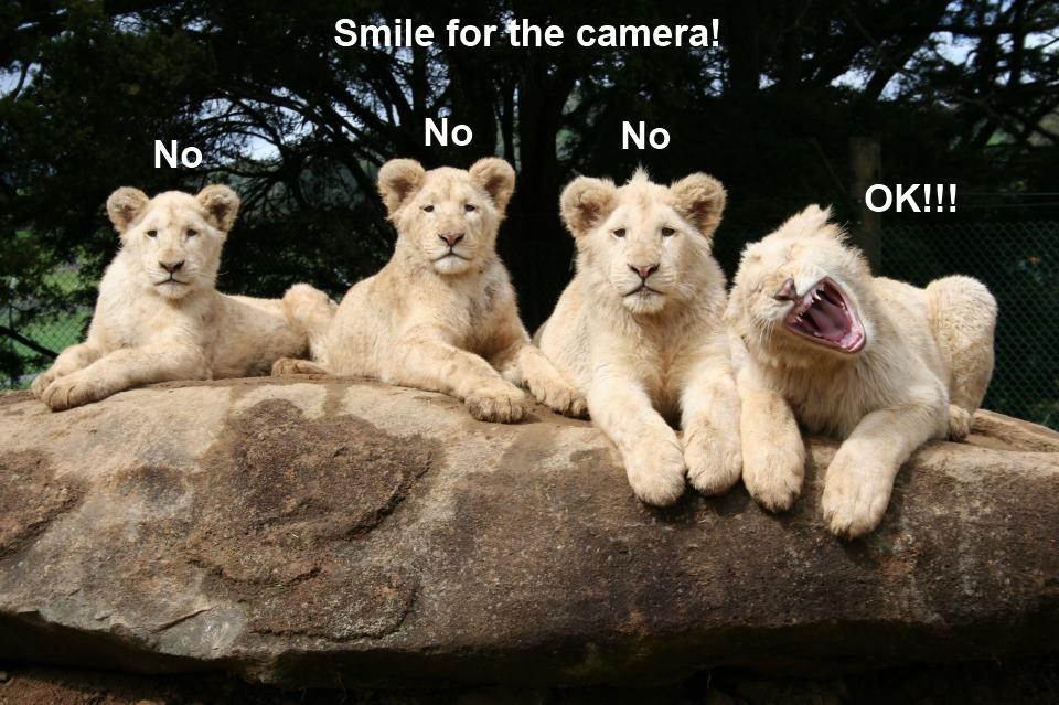 animals funny cubs smiling - photo #1