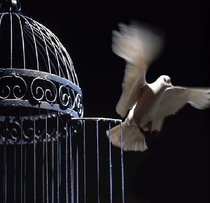 Posted by queen bee at 02 15Bird Freedom From Cage