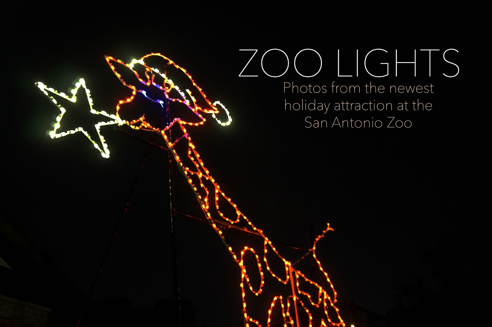 san antonio zoo lights a new tradition family in my city