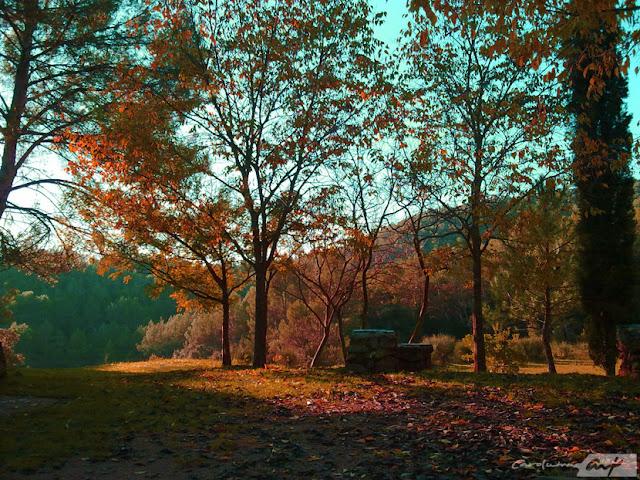 bosque en otoño hoja perenne