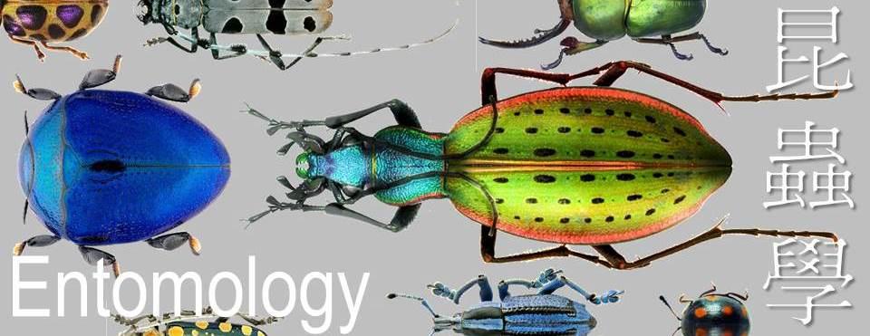 昆蟲學是個歡樂的課程