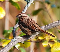 Bog Birds