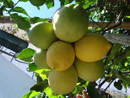 11 Limões num cacho