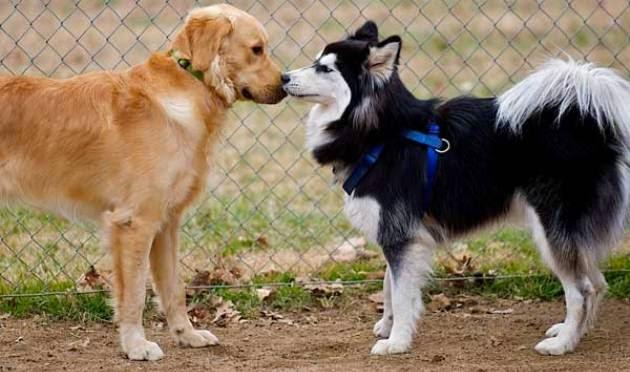 Anticonceptivos Para Perros