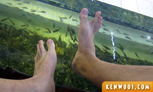 fish spa legs
