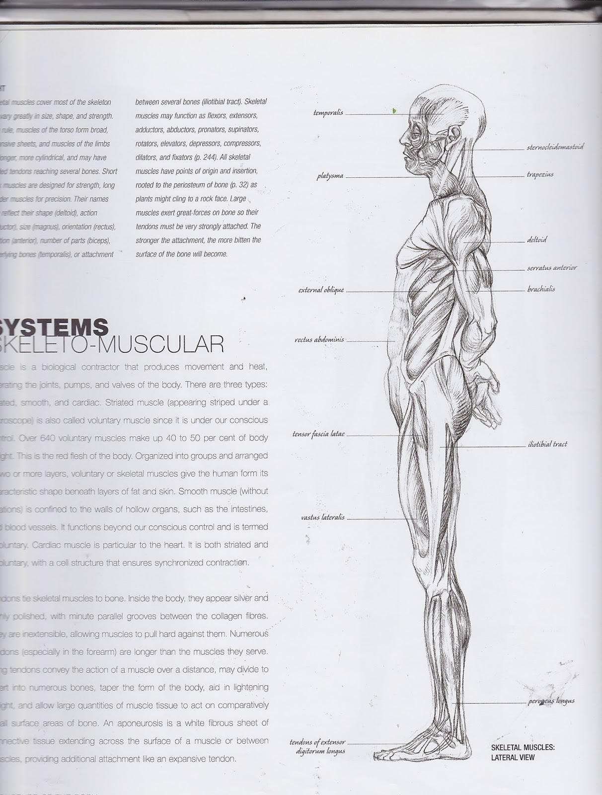 Anatomy and Da Vinci scanned in Images from borrowed books - Jazz ...
