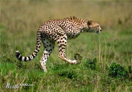 Những động vật cực dị nhất nhờ photoshop !