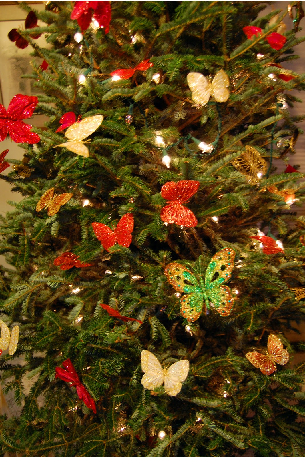 Donna and the bears let 39 s get this decorating done for Where do christmas trees come from