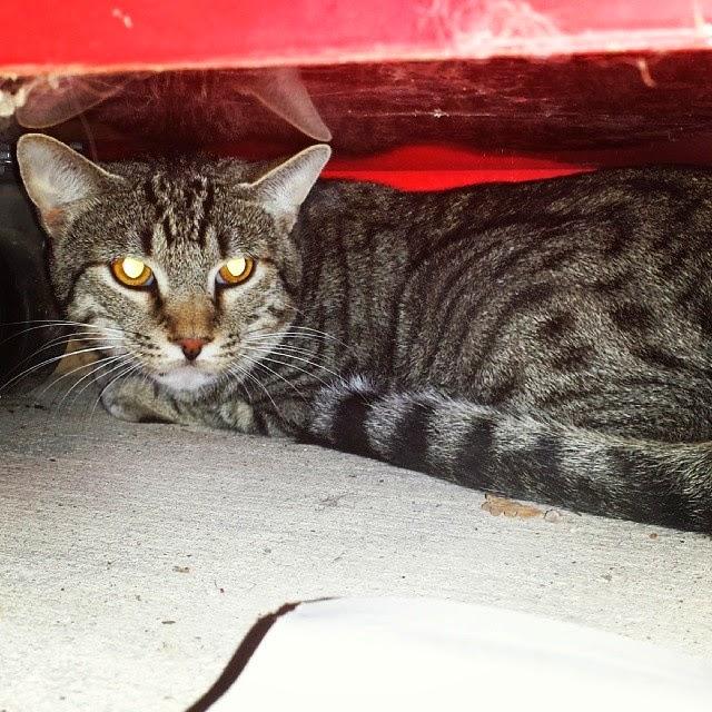 Tom the Tomcat