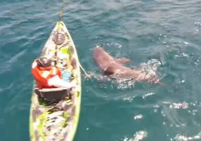 Big Shark, Little Kayak
