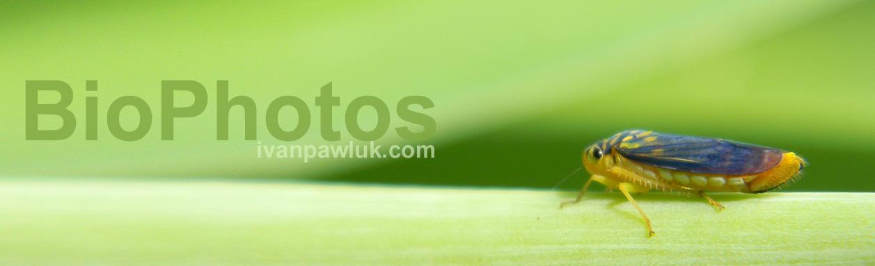 BioPhotos Ivan Pawluk - Biodiversidad