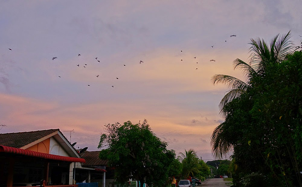 flock of flying bulbul in Malaysia