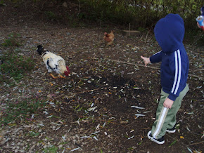 Fall 2011 - Feeding the Chickens at the Farm