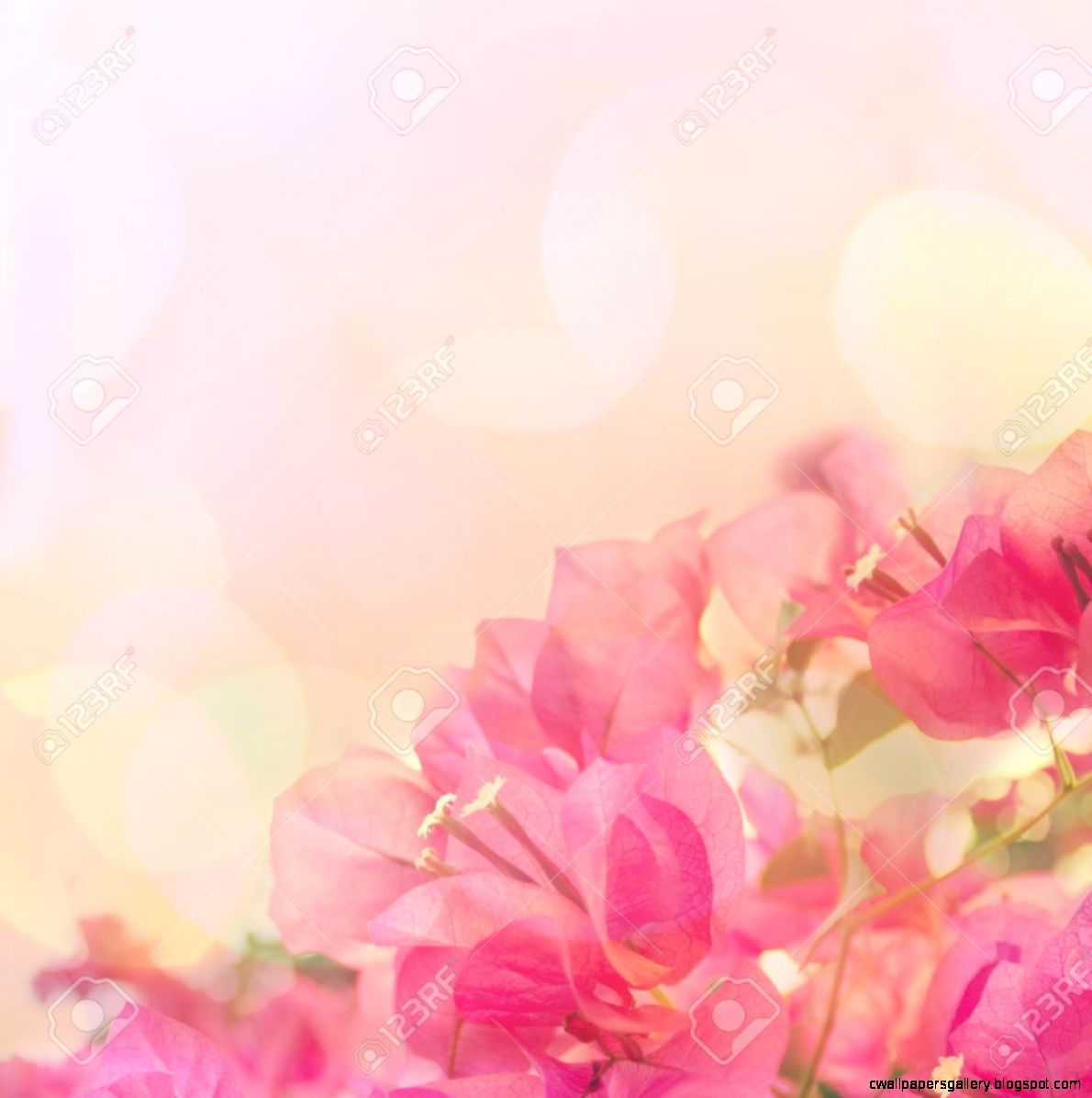 Beautiful Abstract Fl Background With Pink Flowers Border