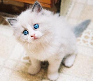 Nomes Para Gatos Com a Letra G