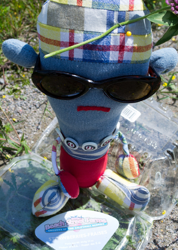 Tonka Wonka disapproves of a plastic container littering the side of Prince Edward County Road 27.