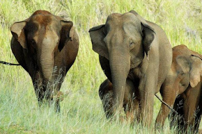 Elephants at Periyer National Park