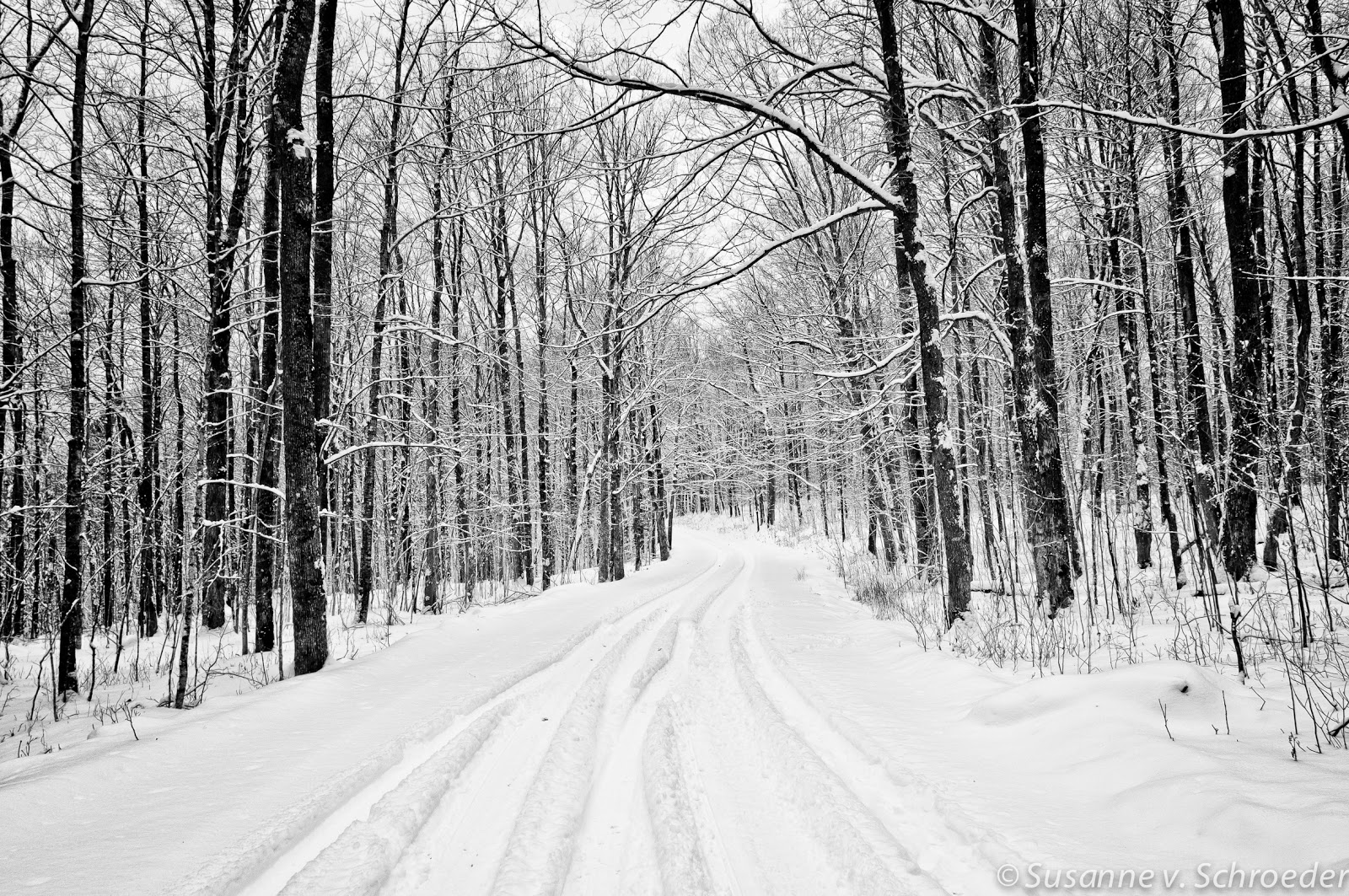 Soul Centered Photography: Black and White Winter Photography