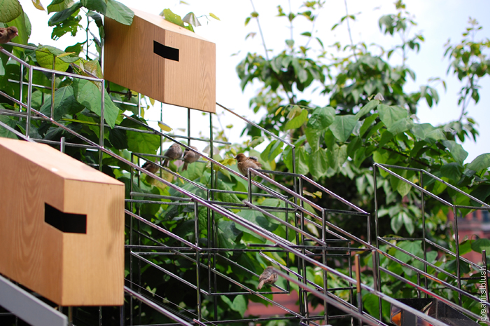 Cube shaped bird houses at the High Line Bird