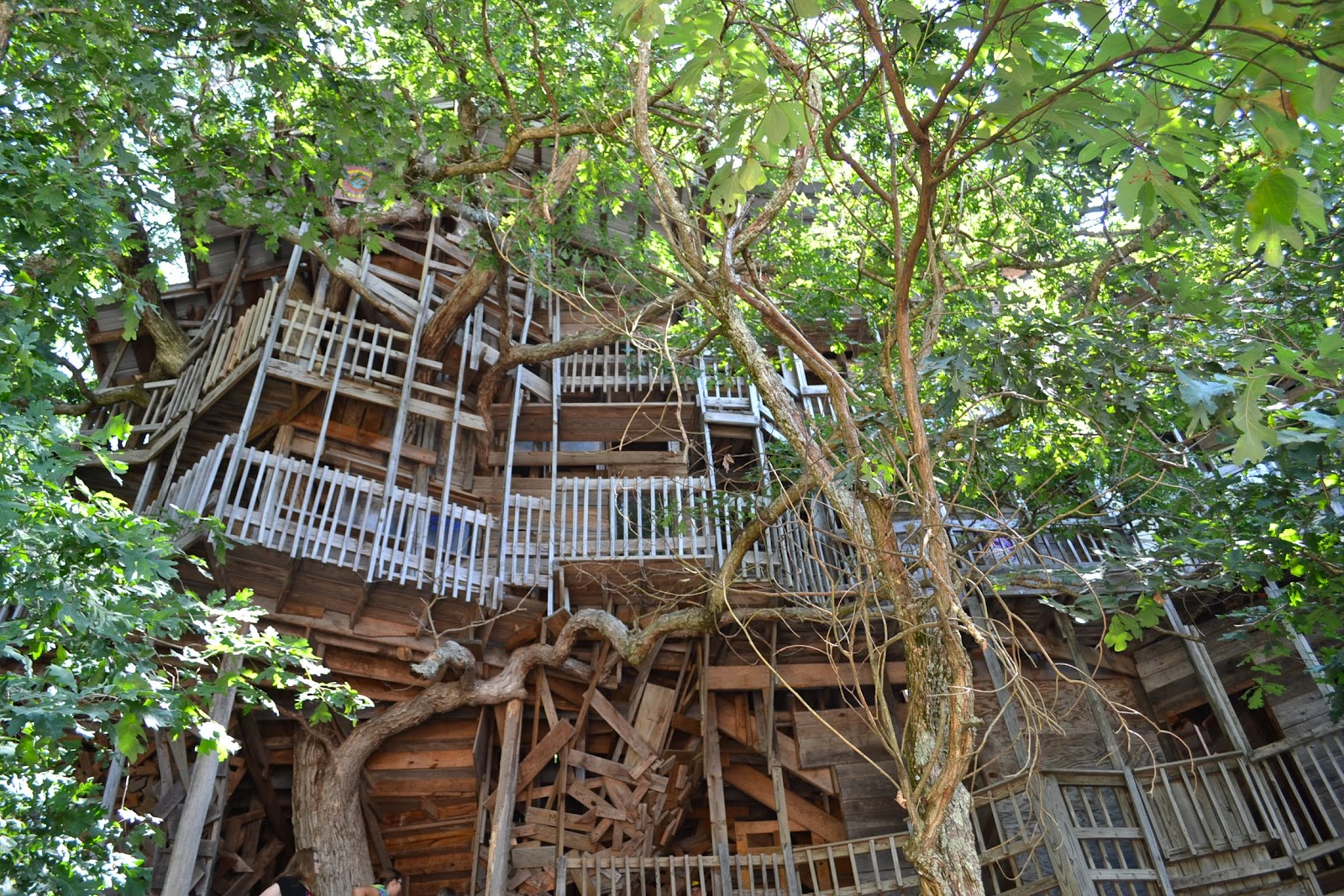 Biggest Treehouse In The World 2013 the cottage cheese: the world's largest treehouse