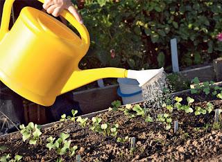 Садово-огородная магия: заговоры и советы для вашего урожая (чсть 2)