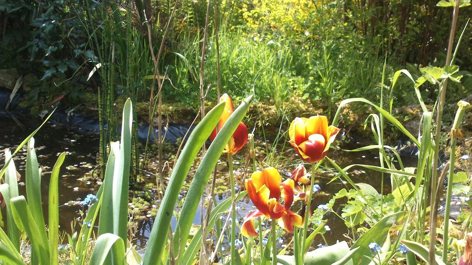 Naboo pop 39 s blog avril 2013 for Le jardin de catherien