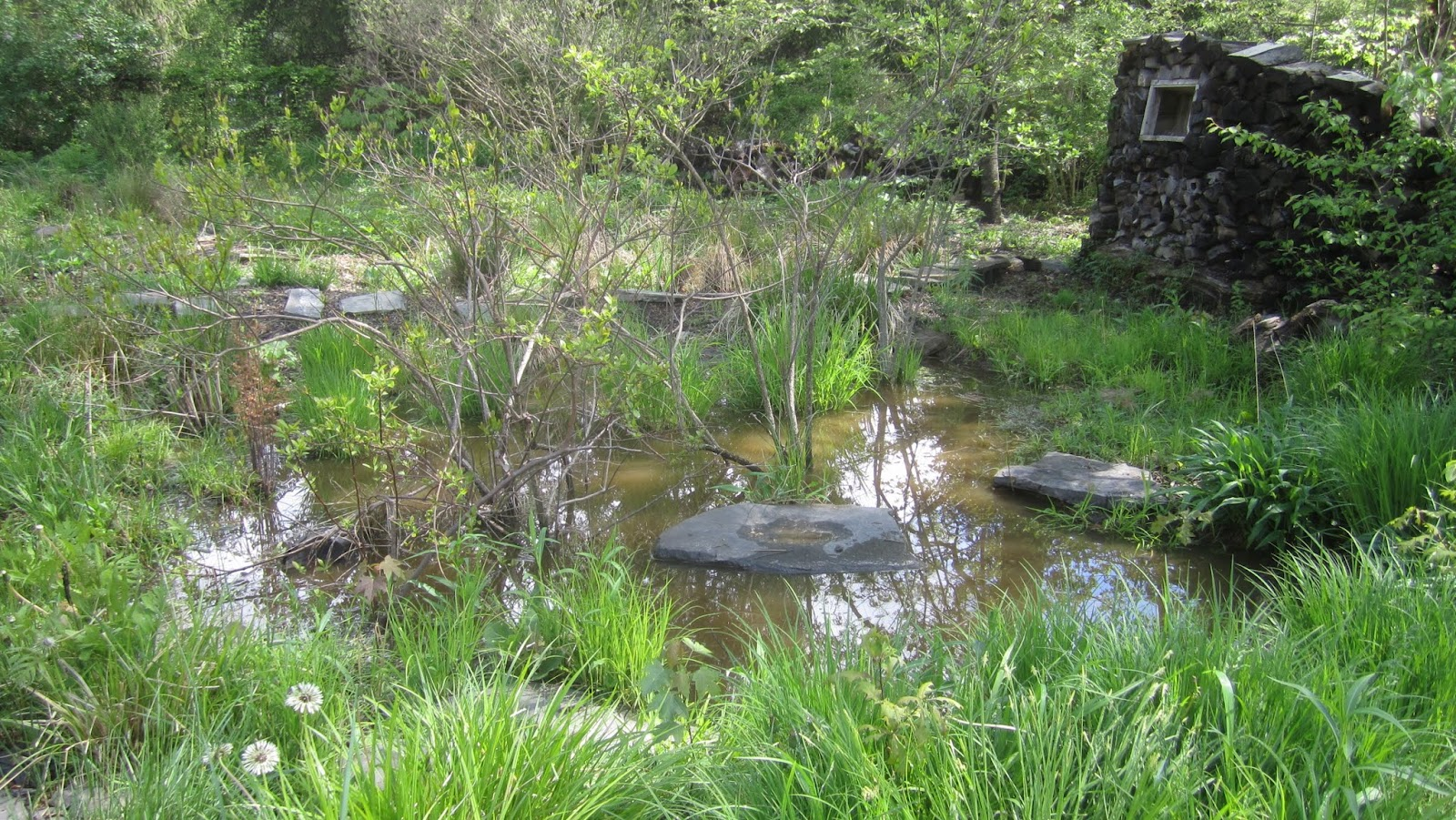 backyard habitat recipe princeton nature notes