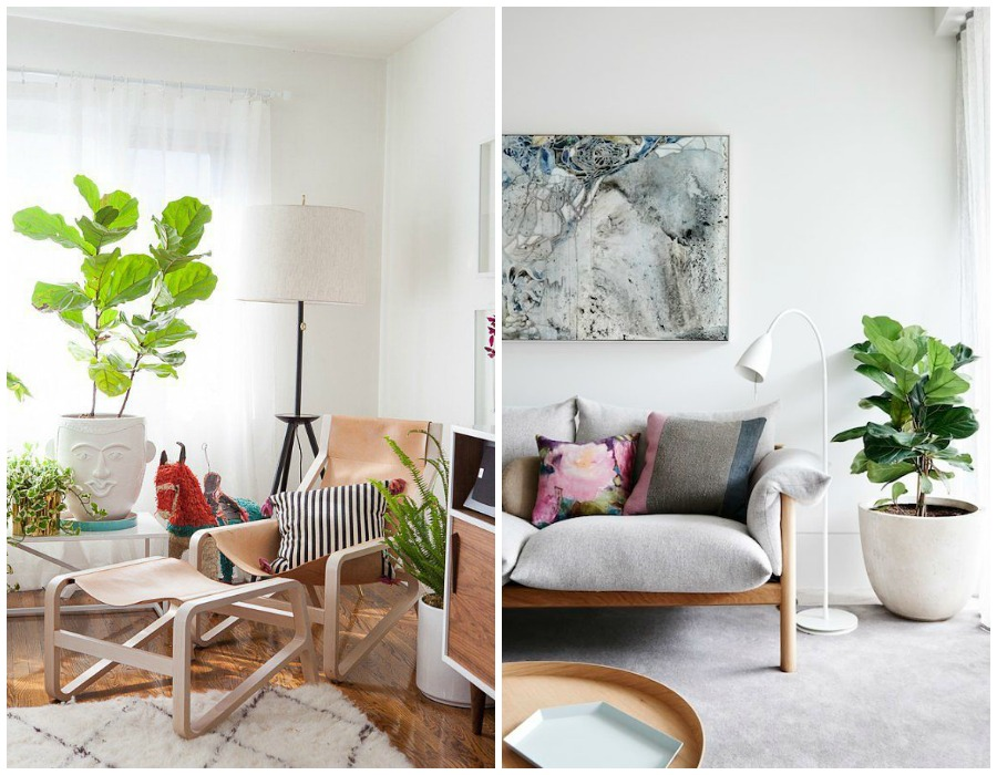 10 mejores plantas de interior decoraci n - Las mejores plantas de interior ...
