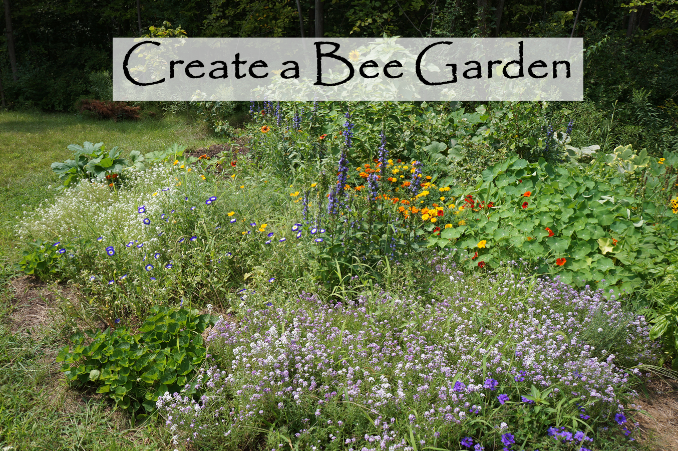 Wild Backyard Garden : The Backyard Farming Connection Planning a Bee Garden