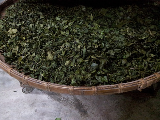 2013 鹿谷春茶
