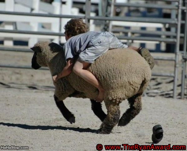 Kids Rodeo - Riding a sheep
