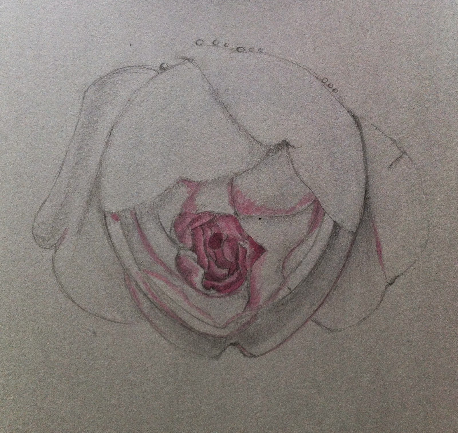 ABSPD Module 1 sketching excercise Rose