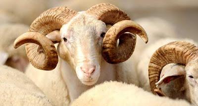 Hukum Menjual dan Menukar Kulit Hewan Kurban dengan Daging