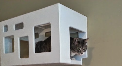 Off the Wall Cat Hideout | Exclusively Cats Veterinary Hospital, Waterford, MI
