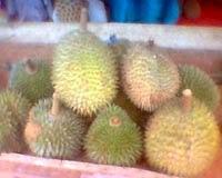 Wisata Buah Durian Desa Tebul Timur
