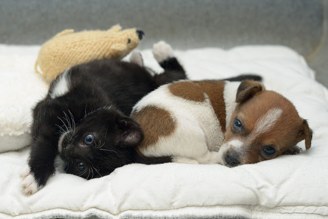 Buttons the puppy and Kitty the kitten become best friends, adopted animals, animal friends, cute baby animals
