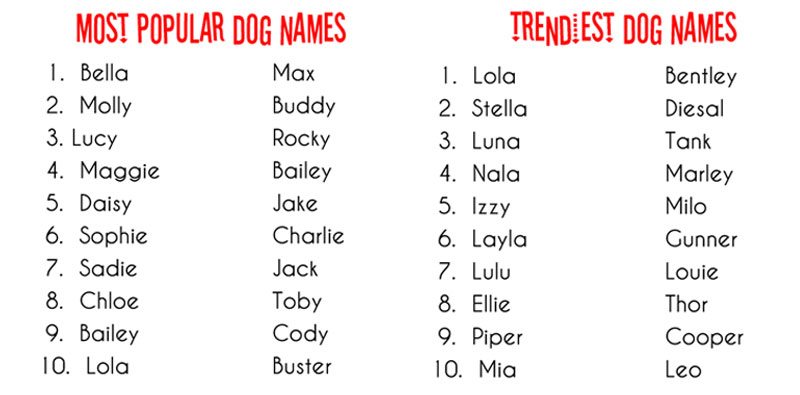 Cute Manly Dog Names