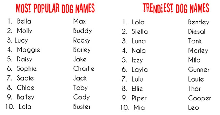 H Dog Names Talking Dogs at For Lo...