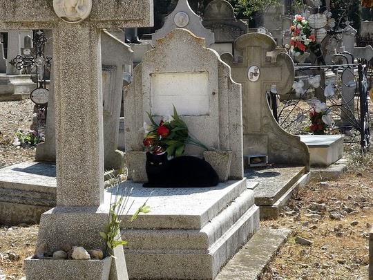 Torrero Cemetery cat