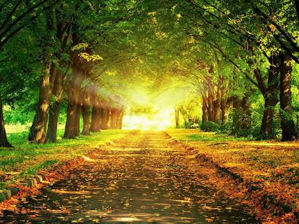 Gambar taman yang indah
