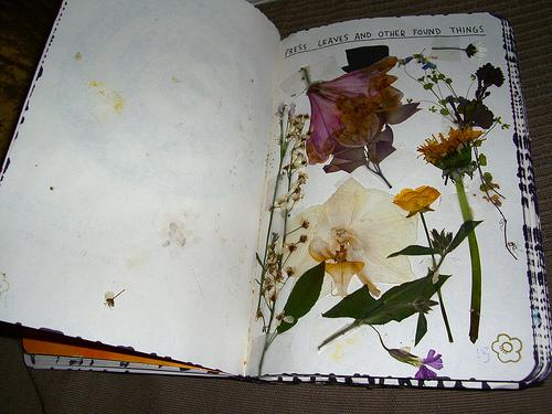 wunderkammer pressed flowers